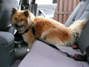 sicherheitssysteme f r hunde im auto die verschiedenen. Black Bedroom Furniture Sets. Home Design Ideas