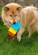 Geschicklichkeitsspiele Für Hunde