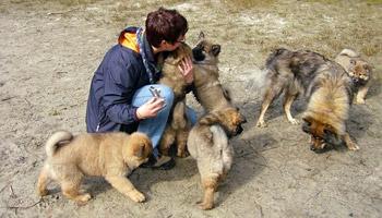 Herpes bei hunden