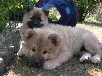 Tips For Puppy Purchase